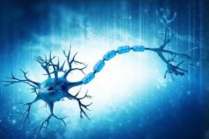 Лечение рассеянного склероза с помощью моноклональных антител ...
